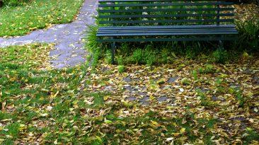 foto la panchina di oldman