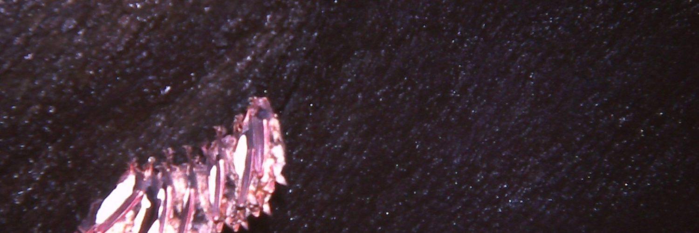 Gruppo di pipistrelli (Myotis myotis) nella Grotta dei Tre Livelli (Foto A. Maugeri)
